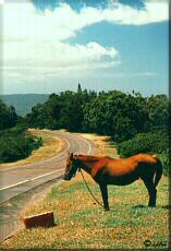 Photo - Horse powered highway maintenance