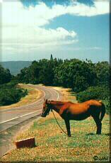 Photo - Horse powered highway maintenance