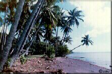 Photo - Beach at the mango grove